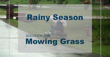Lawn Mowing Rainy Season