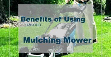 Mulching Benefits Lawn Mowing