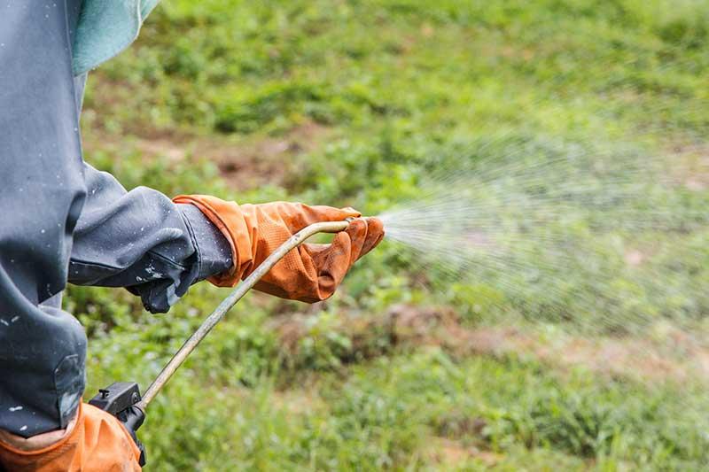 spraying weed killer